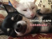 動物介護施設 寿