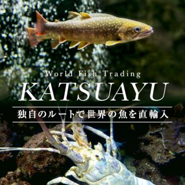 KATSUAYU